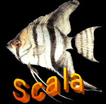 Scalar is german for Angelfish hence finally a Scala logo?